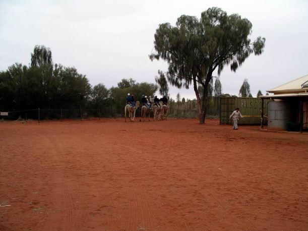 Resize of 09-05-2004 03 Ayers Rock Camel Rides 3.JPG