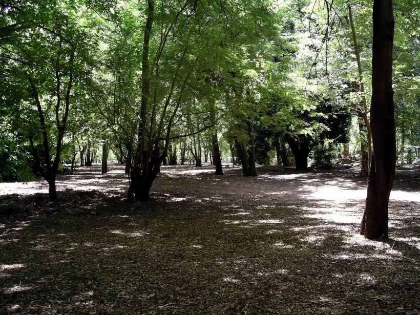 Resize of 3-19-2005 Adels camping areas in the Grove.jpg
