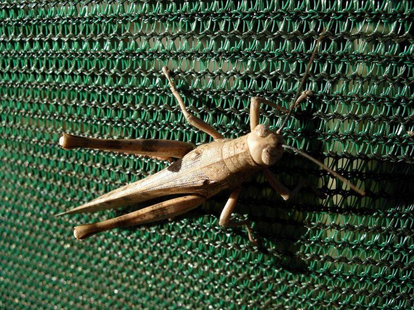 Resize of 05-27-2005 07 Grasshopper 2.JPG