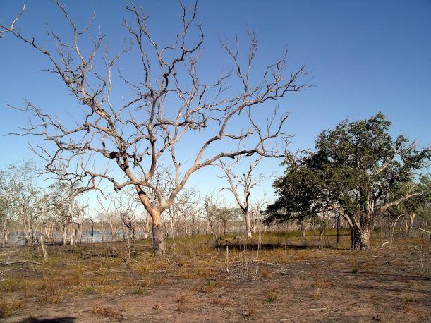 Resize of 05-29-2005 04 Wetland Tree Study.JPG