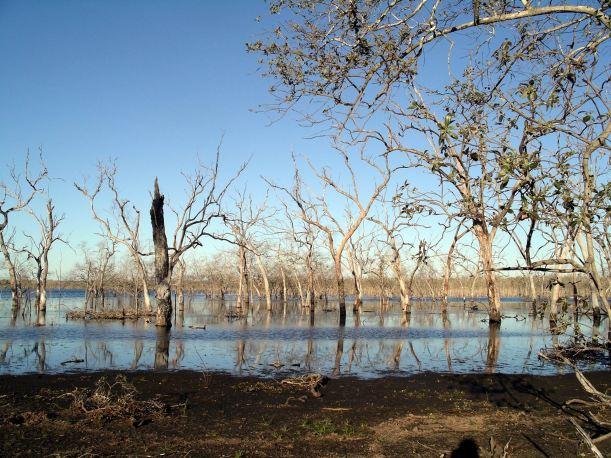 Resize of 05-29-2005 05 Wetland Tree Study 4.JPG