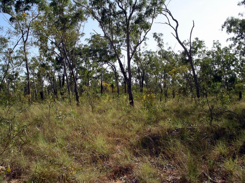 Resize of 06-04-2005 03 Vegetation June 2005.JPG