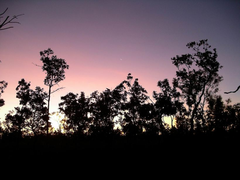 Resize of 06-09-2005 08 Cane Toad Clearing Sunset.JPG