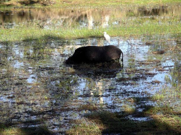 Resize of 08-08-2005 58 Pig 3.JPG
