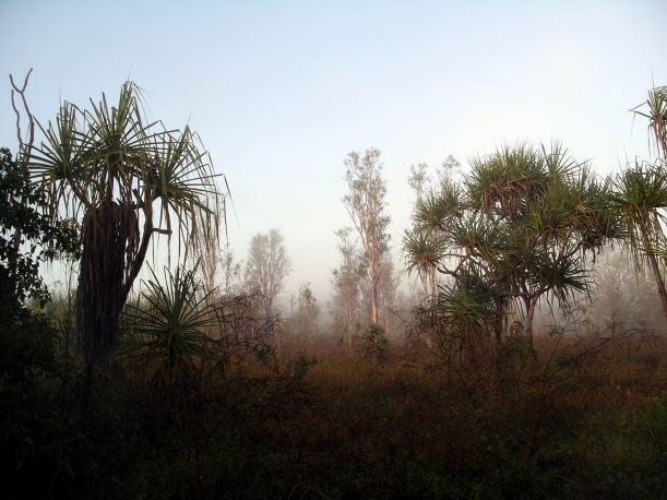 Resize of 08-15-2005 01 Pungalina Mist