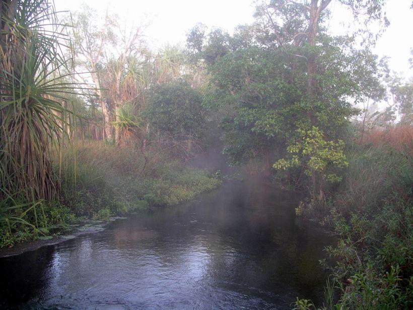 Resize of 08-15-2005 02 Pungalina Mist 2