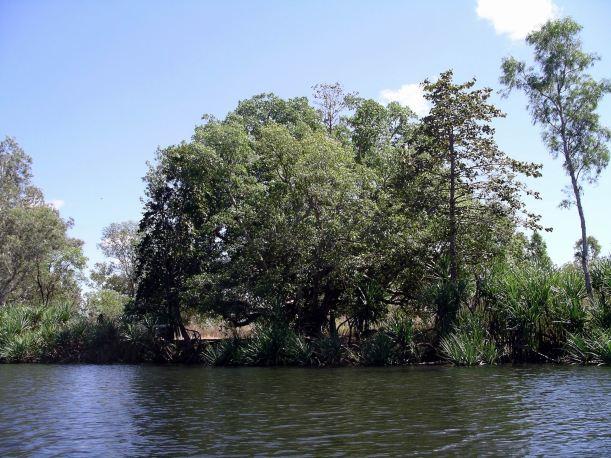 Resize of 08-30-2005 21 Croc Hole Fig Tree