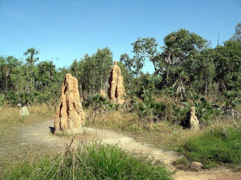 Resize of 05-16-2006 02 Termite mounds Litchfield