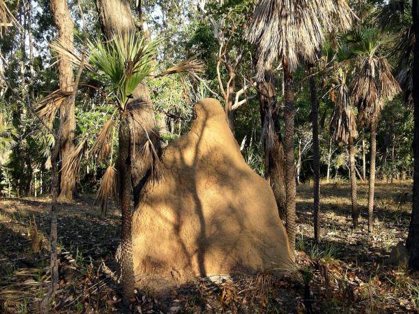 Resize of 05-30-2006 06 Burnt area scene Monsoon 2