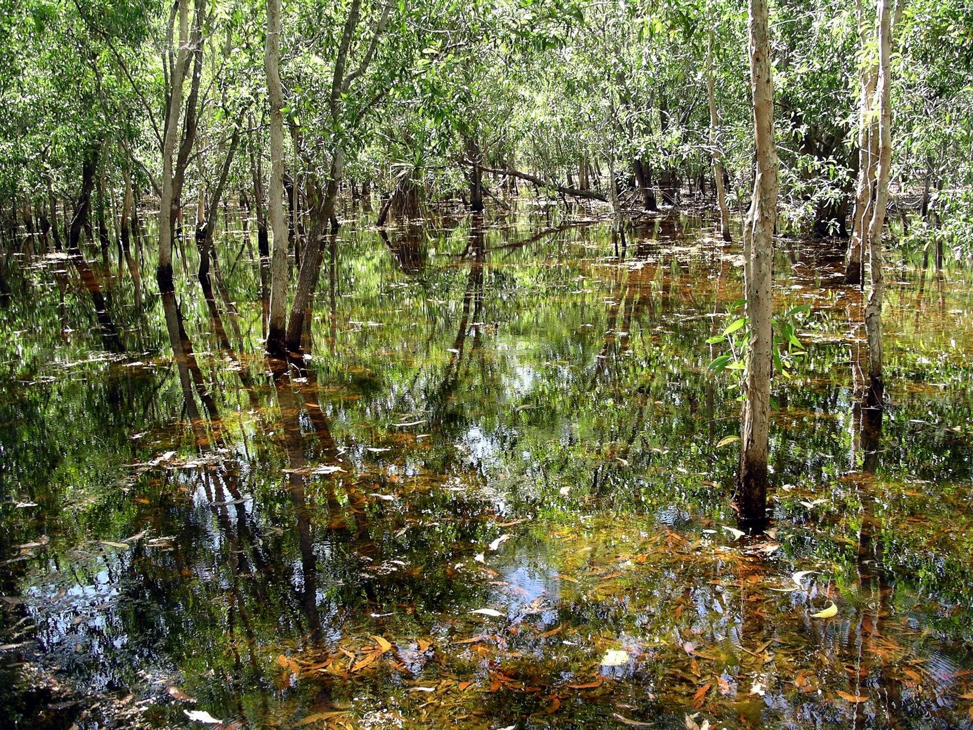 Resize of 05-31-2006 12 Lagoon study TW Park