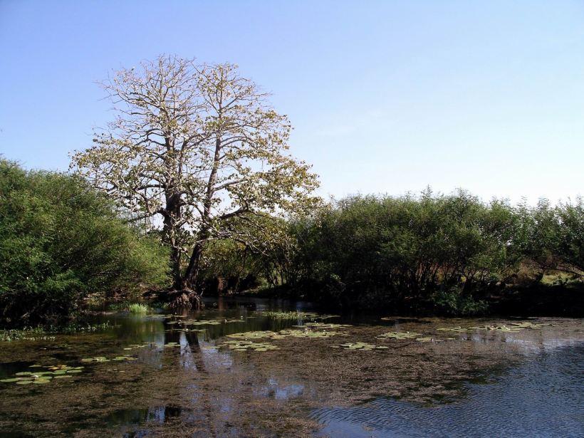 Resize of 07-18-2006 43 LaBelle Leichardt Pine
